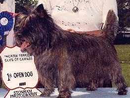 The History of the Cairn Terrier Club
