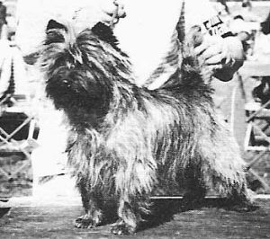 Cairn Terrier Club of Canada History