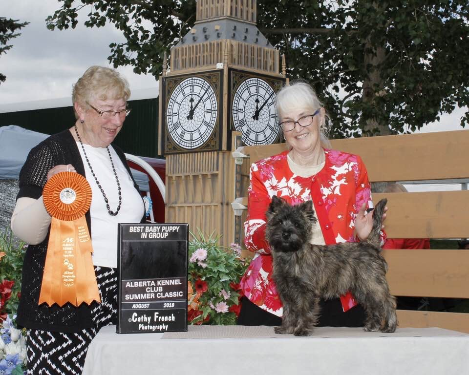 Cairn Terrier Judging
